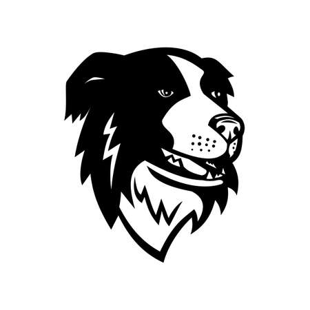 Mascot illustration of head of a Border Collie or Scottish Sheepdog, a working and herding dog breed for herding livestock viewed from front on isolated background in retro black and white style.