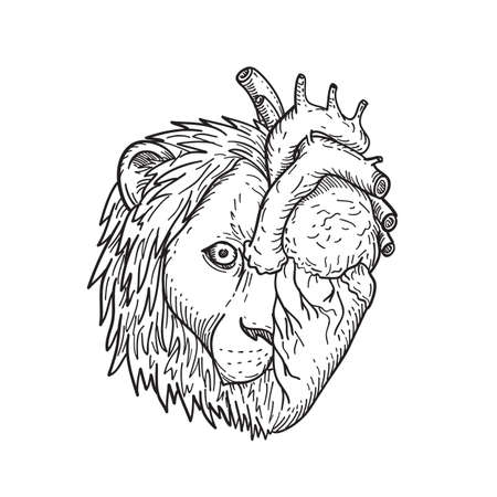 Black and white drawing sketch style illustration of a lion-hearted, head of half lion and human heart on other side viewed from front on isolated white background.