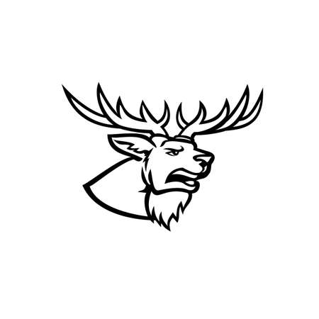 Mascot illustration of head of a stag or buck red deer Cervus elaphus, one of the largest deer species, with antlers and roaring viewed from side on isolated background in retro black and white style.