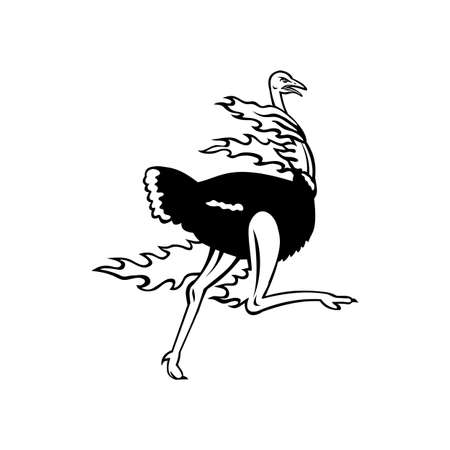 Mascot illustration of a common ostrich, a species of large flightless bird native to Africa, running while on fire viewed from side on isolated background in retro black and white style. 向量圖像