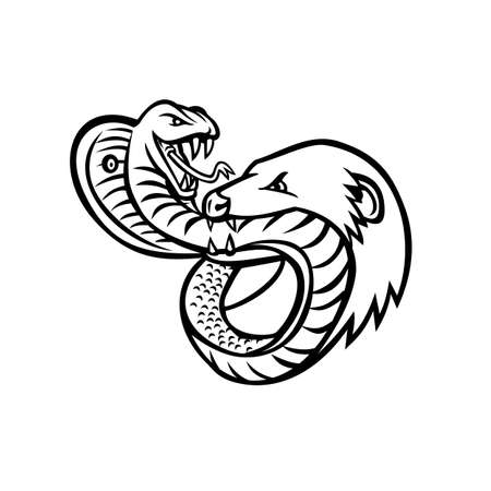 Mascot illustration of a venomous king cobra snake and mongoose fighting, biting and attacking each other viewed from front on isolated background in retro black and white style.