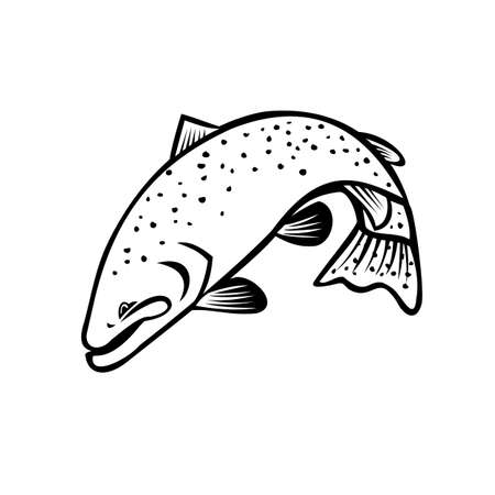 Cartoon style illustration of a steelhead, Columbia River redband trout or coastal rainbow trout bucking and jumping down on isolated background done in black and white.
