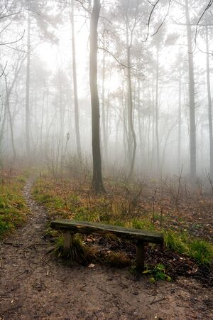 Lonely bench in the foggy forest