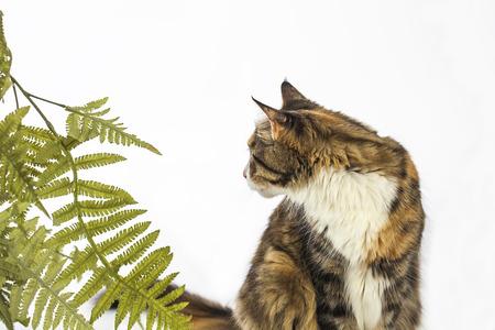 Mooi en nieuwsgierige kat kijken terug
