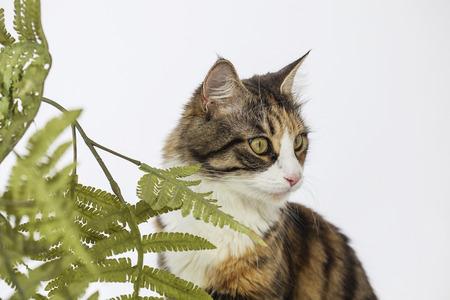 Beautiful cat behind leaves looking aside