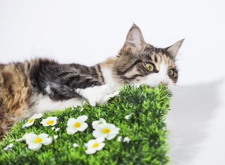 Mooie kat kraken een plastic tuin Stockfoto
