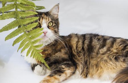 Mooie kat verborgen achter bladeren en blik omhoog Stockfoto