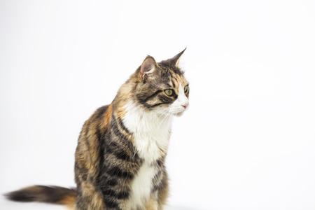 Mooie kat zitten en kijken opzij Stockfoto