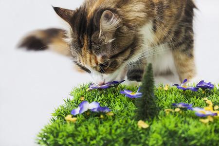 Mooie kat ruiken een kunstmatige bloem
