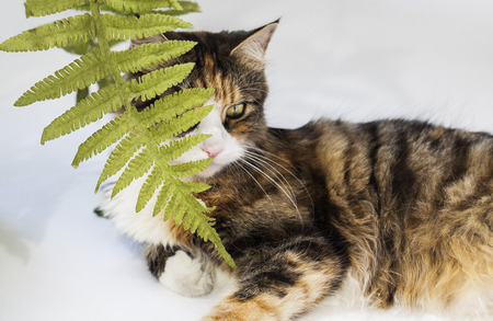 Beautiful cat hidden behind leaves and lying down Stockfoto