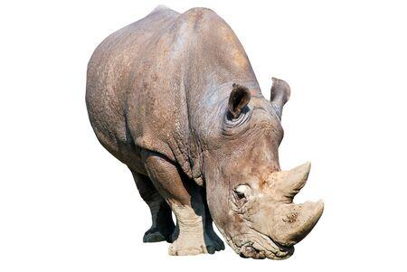 herbivores: Rhinoceros