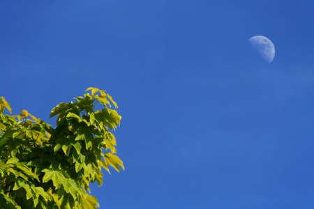 daylight: Moon at daylight