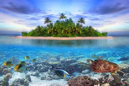 Marine life at tropical island of Maldives Imagens