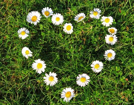 Daisy flowers in a heart shape