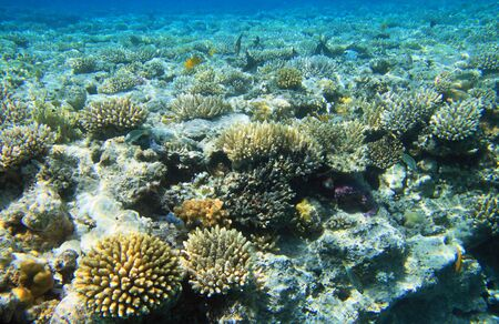 red sea: Coral reef of the Red Sea