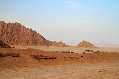 sinai: Sinai mountains at sunset