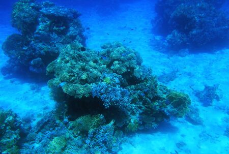 red sea: Coral reef in the Red Sea