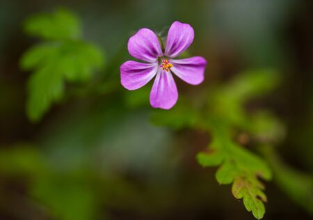 small purple flower: Macro shot of small purple flower Stock Photo