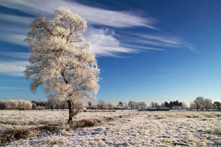 irish christmas: Lonely tree on winter meadow