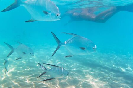 shoal: A shoal of fishes in the Caribbean Sea, Mexico Stock Photo