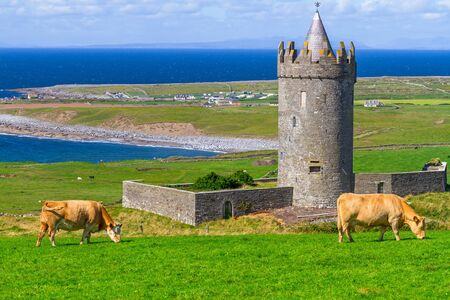 doolin: Doonagore Castle with cows on the farm Editorial
