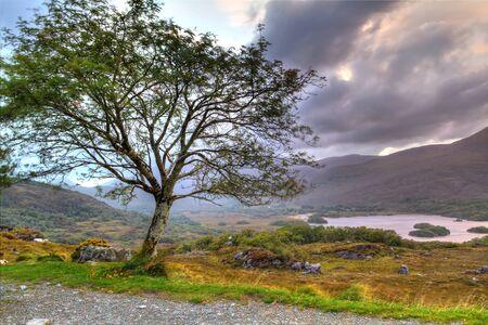 co  kerry: Tree at sunset in Irish mountains, Killarney pass, Co. Kerry