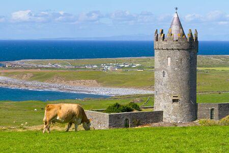 doolin: Doonagore Castle with Irish cow near Doolin