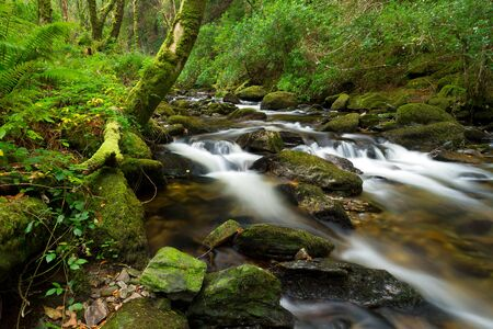 runnel: Killarney National Park creek, Ireland