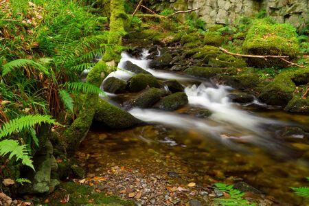runnel: Natural mountain creek scenery Stock Photo