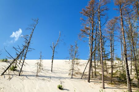 shifting: Forest erosion by shifting dunes in Poland