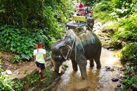 sok: Man with his elephant on the trekking trip in Khao Sok National Park