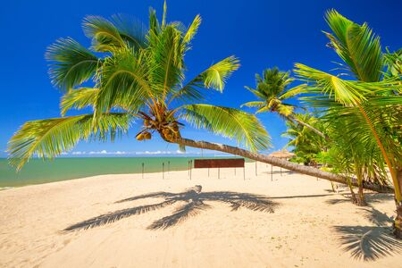 koh kho khao: Tropical palm tree on the beach of Thailand