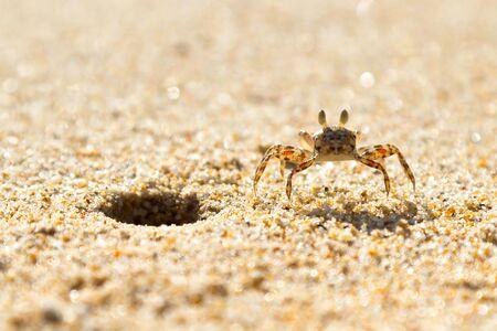 koh kho khao: Small sea crab on the beach of Thailand