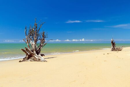 koh kho khao: Beautiful beach of Andaman Sea with tree roots, Koh Kho Khao, Thailand