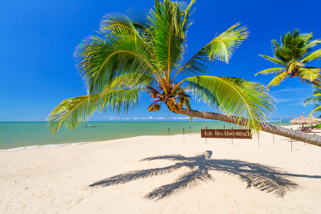 Tropical palm tree on the beach of Koh Kho Khao island, Thailand