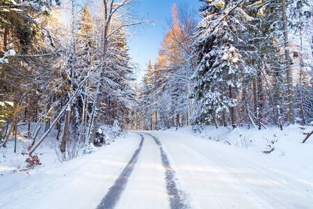 snowbank: Snowy road in winter forest of Poland Stock Photo