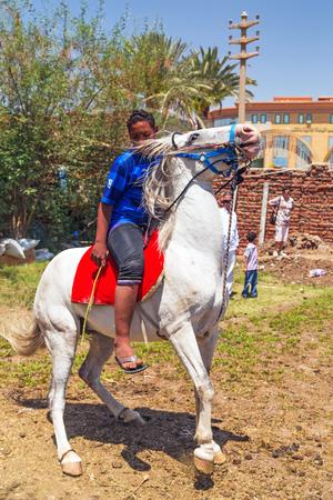arabic boy: Arabic boy on the horse in the bedouin village near Luxor