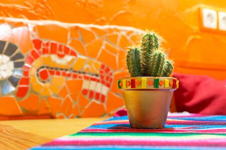 Mexican cactus in the pot Stock Photo - 59422749