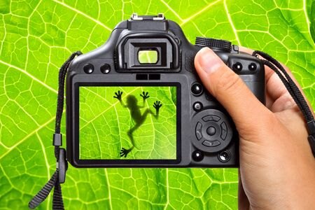 treefrog: DSLR camera in hand shooting a green tree frog