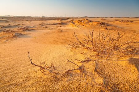 Sandy desert near Abu Dhabi, United Arab Emirates Editorial
