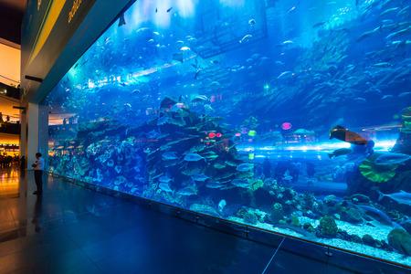 Huge Oceanarium inside Dubai Mall Editorial