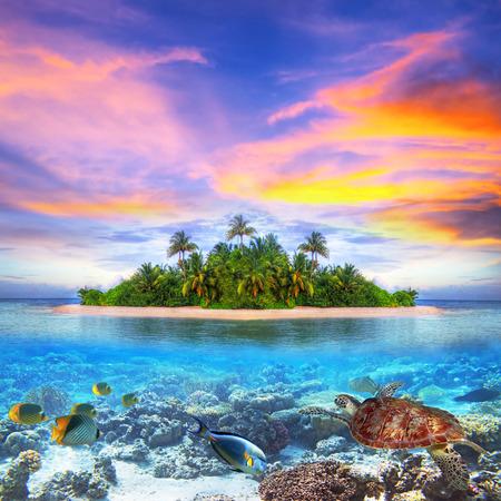 Marine life at tropical island of Maldives Standard-Bild