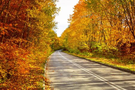 road autumnal: Road in the autumnal forest Stock Photo