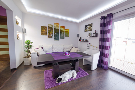room: Modern living room interior with dog on the floor