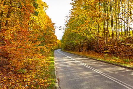 Road in the autumnal forest Stock Photo
