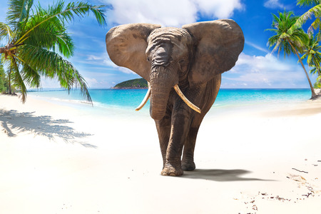 African elephant walking on tropical beach Reklamní fotografie
