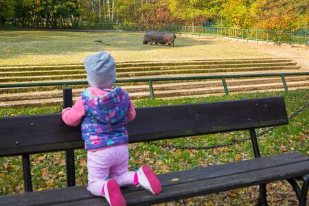 Little toddler girl looking at the hippo in the zoo