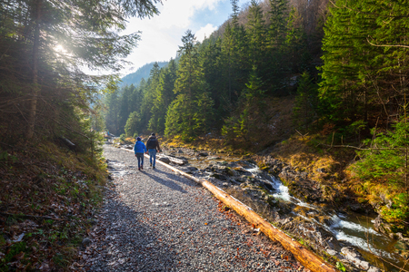 Mountaing trail in beautiful forest near Zakopane, Poland