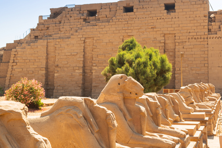 Ancient statues of Ram-headed sphinxes in Karnak temple, Luxor