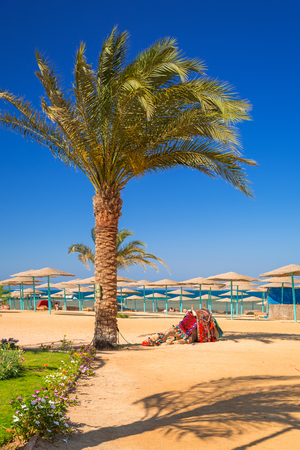 Camel resting in shadow on the beach of Hurghada, Egypt Stock Photo